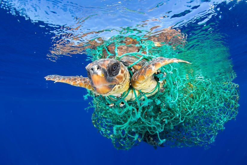 Sur cette photo prise sous l'eau, on peut voir une tortue prise dans des filets de pêche.