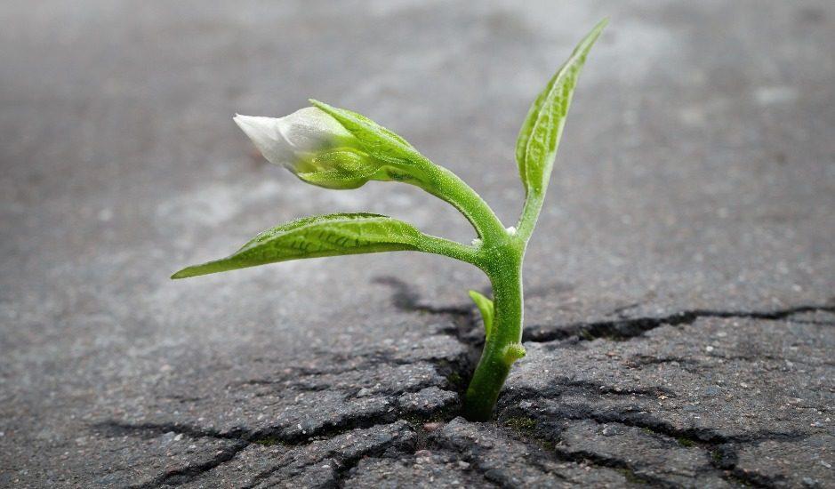 Une fleur poussant à travers l'asphalte.