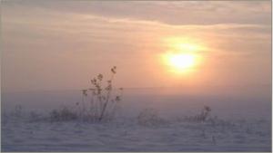 Un coucher de soleil sur un paysage enneigé avec un arbuste à l'avant-plan